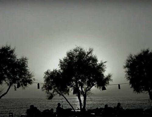 Τα Φιλότιμα Δέντρα της Πάτμου